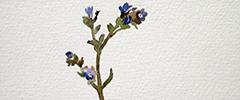 Акварели и минимализъм от художничката Геновева Рогова
